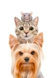 Retrato divertido de un perro, de un gato y de una rata fotos de archivo libres de regalías