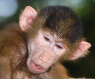 Retrato divertido del mono Imagen de archivo