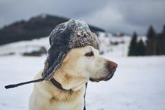 Retrato divertido del perro con el casquillo del invierno imágenes de archivo libres de regalías