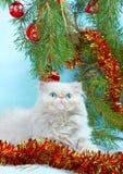 Retrato do ano novo s - uma filial com a esfera do ano novo s Fotografia de Stock Royalty Free