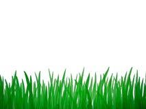 retrato do aquarelle da grama verde Imagens de Stock