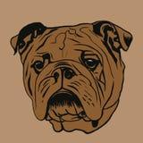 Retrato do buldogue ilustração royalty free