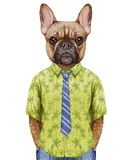 Retrato do buldogue francês em uma camisa do verão com laço Foto de Stock Royalty Free