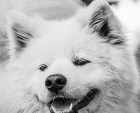 Retrato do cão Imagem de Stock Royalty Free