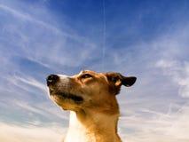 Retrato do cão (190) fotos de stock royalty free