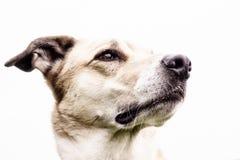 Retrato 17 do cão fotos de stock royalty free