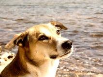 Retrato 234 do cão fotografia de stock royalty free