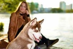 Retrato do cão bonito foto de stock royalty free