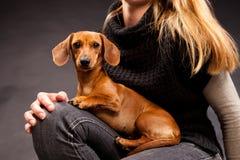 Retrato do cão bonito do bassê nos joelhos do proprietário Imagens de Stock Royalty Free