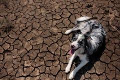 Retrato do cão border collie no deserto solo rachado da secagem foto de stock royalty free