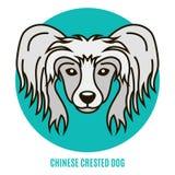 Retrato do cão com crista chinês Ilustração do vetor no estilo de Fotografia de Stock