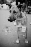 Retrato do cão do abrigo Fotos de Stock