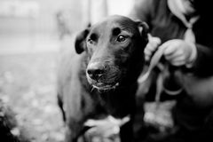 Retrato do cão do abrigo Imagem de Stock