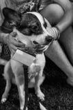Retrato do cão do abrigo Imagem de Stock Royalty Free