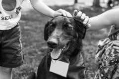 Retrato do cão do abrigo Imagens de Stock