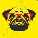 Retrato do cão do Pug com vidros Fotografia de Stock