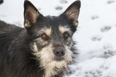 Retrato do cão no fundo da neve imagem de stock royalty free