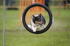 Retrato do cão no quadro Fotos de Stock