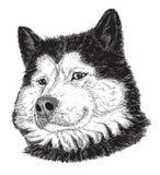 Retrato do cão (preto e branco) Fotos de Stock