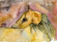 Retrato do cavalo Imagem de Stock Royalty Free