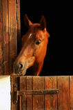 Retrato do cavalo Fotografia de Stock Royalty Free