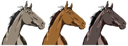 Retrato do cavalo ilustração stock