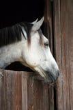 Retrato do cavalo Imagem de Stock