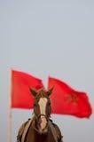 Retrato do cavalo com uma bandeira marroquina vermelha e um céu claro Fotografia de Stock