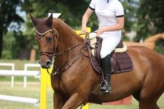 Retrato do cavalo de Brown durante a competição Fotografia de Stock Royalty Free