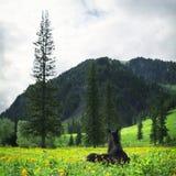 Retrato do cavalo no campo verde Fotos de Stock Royalty Free