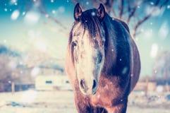 Retrato do cavalo no dia de inverno gelado com queda de neve imagens de stock royalty free