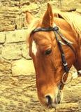 Retrato do cavalo vermelho bonito Imagem de Stock