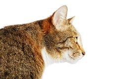 Retrato do close up de um gato no perfil Imagem de Stock