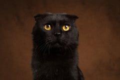 Retrato do close up do gato preto mal-humorado Foto de Stock Royalty Free
