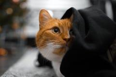 Retrato do close-up do gato vermelho que esconde sob a cobertura preta fotos de stock