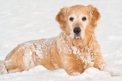 Retrato do cão do inverno Fotos de Stock Royalty Free