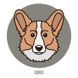 Retrato do Corgi Ilustração do vetor no estilo do plano Imagem de Stock