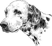 Retrato do dalmatian ilustração royalty free