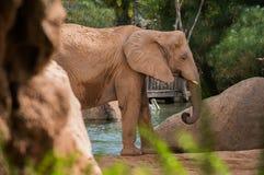 Retrato do elefante Fotografia de Stock