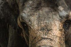 Retrato do elefante no jardim zoológico da porcelana imagens de stock