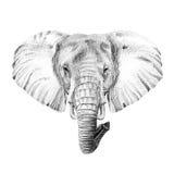 Retrato do elefante tirado à mão no lápis Imagens de Stock