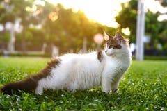 Retrato do estilo da arte do gato preto-branco que está e que olha para trás Fotos de Stock Royalty Free