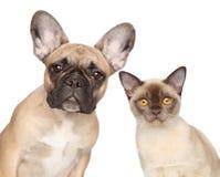 Retrato do Fim-acima de um gato e de um cão imagem de stock royalty free