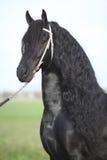 Retrato do garanhão lindo do frisão com cabelo longo perfeito foto de stock royalty free