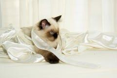 Retrato do gatinho fotografia de stock royalty free