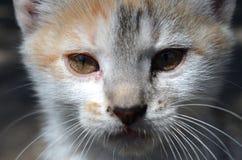 Retrato do gatinho Fotografia de Stock