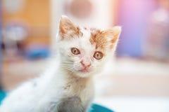 Retrato do gatinho disperso no foco seletivo Imagens de Stock