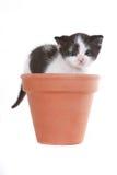 Retrato do gatinho no estúdio no fundo branco Imagens de Stock Royalty Free