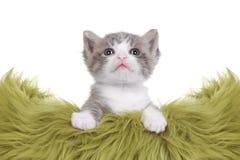 Retrato do gatinho no estúdio no fundo branco Foto de Stock