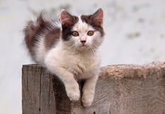Retrato do gatinho pequeno Fotos de Stock Royalty Free